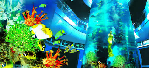 青岛的海底世界_青岛海底世界 | IAUTV中华国际网络电视台